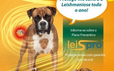 Mês da Leishmaniose Canina